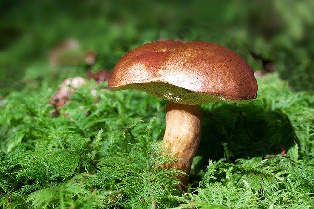 modré houby